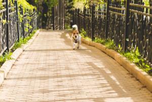 Creating a Fenced Dog Run in Your Backyard - Horner ...